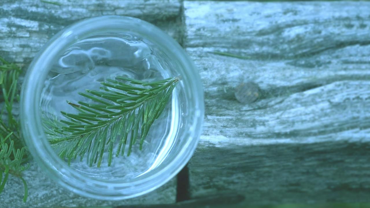 森の恵みをそのまま抽出した天然森林オイルが「クリアフォレスト」の主役