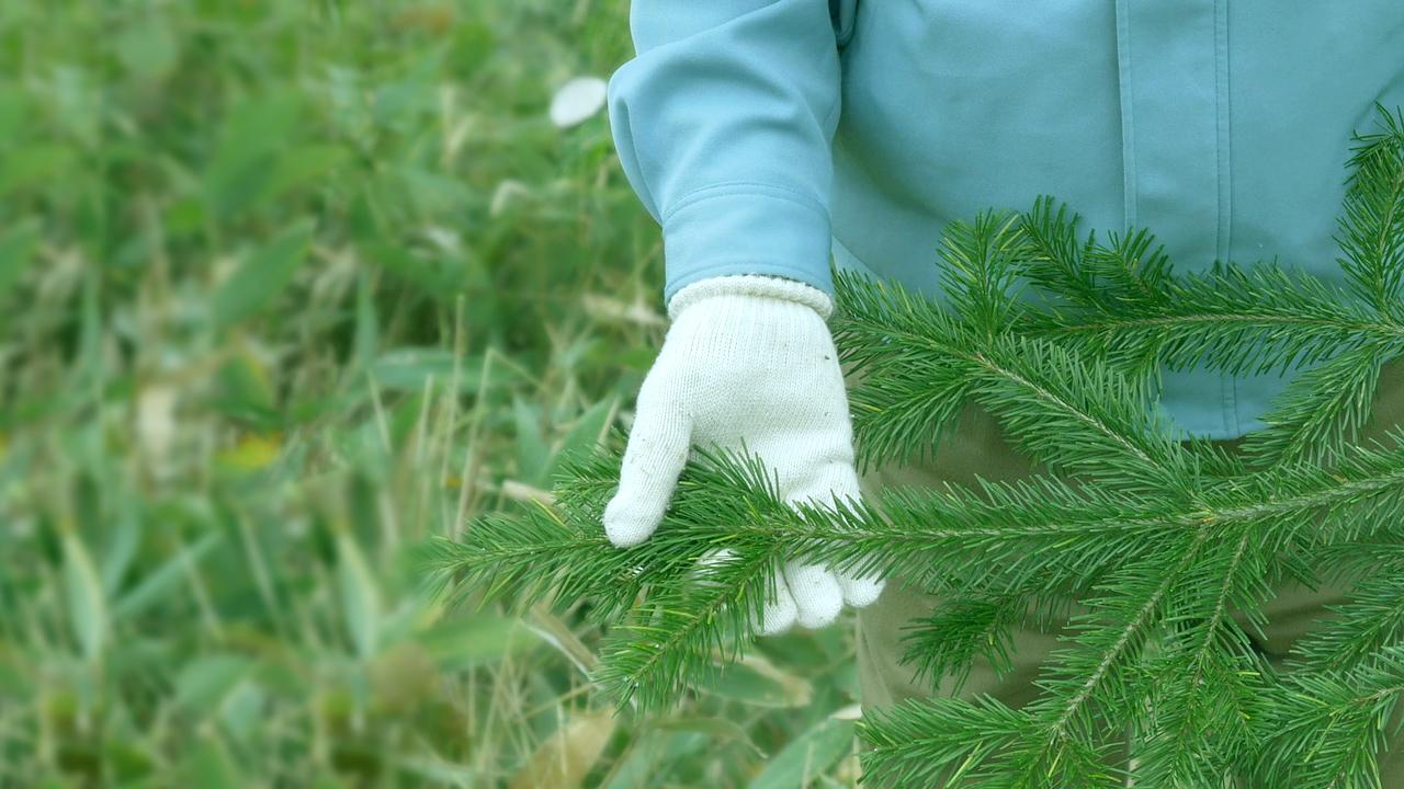 森の香り成分(β-フェランドレン)を豊富に含むトドマツが広がる クリアフォレストの森