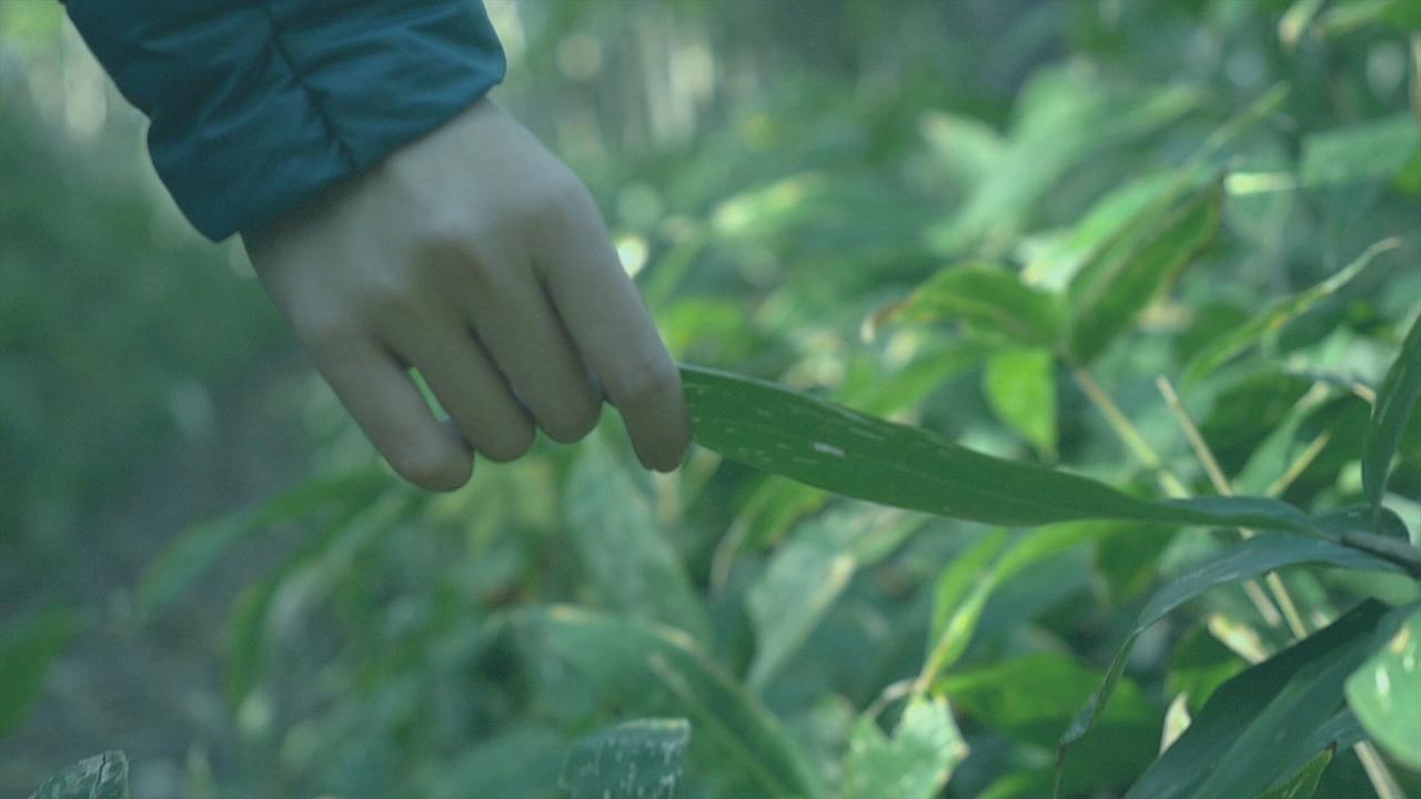 癒しの森で健康に。「自然療法」という文化