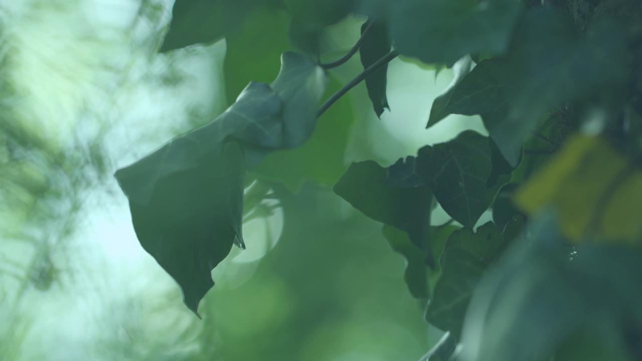 """森の""""空気浄化メカニズム""""を応用した新発想のナチュラル・エアケア製品"""